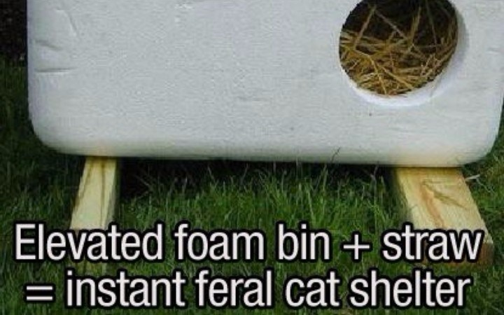 clever hacks to use when you find stray cat