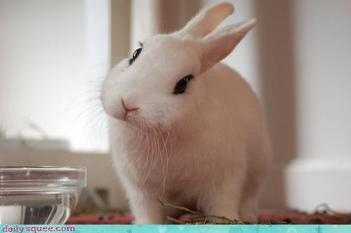 bunny cute squee spree - 3534268672