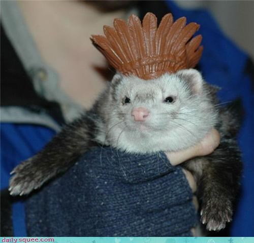 face ferret hat - 3534617600