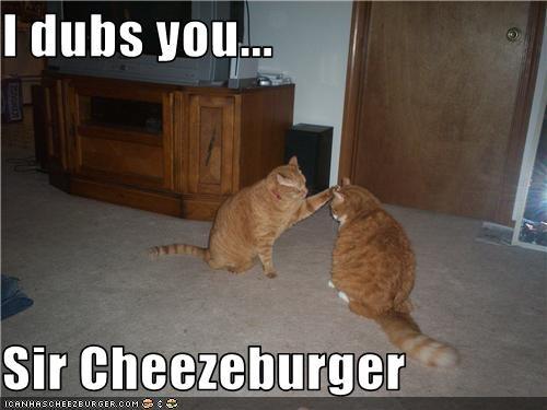 Cheezburger Image 3535421440