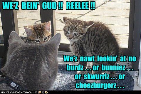 Cheezburger Image 3535681792