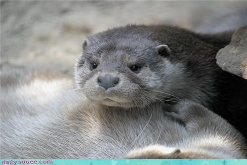 boopable face otter - 3535873024