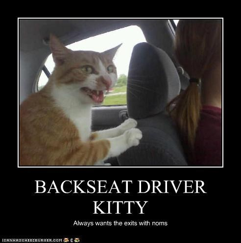 BACKSEAT DRIVER KITTY Always wants the exits with noms