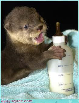 noms otter squee spree - 3536060928