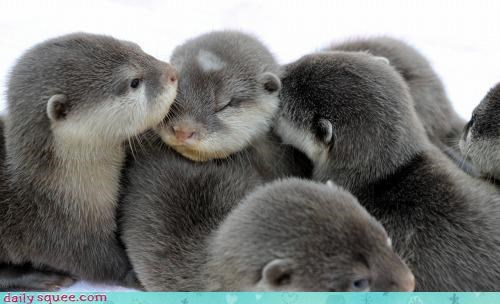 fuzzy otter squee spree - 3536520448