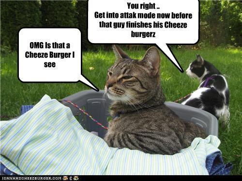 Cheezburger Image 3537121280