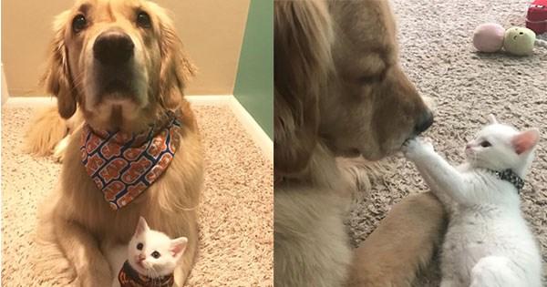 gato perro enemigos