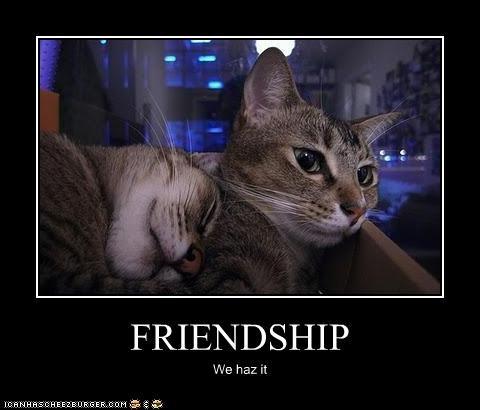 FRIENDSHIP We haz it