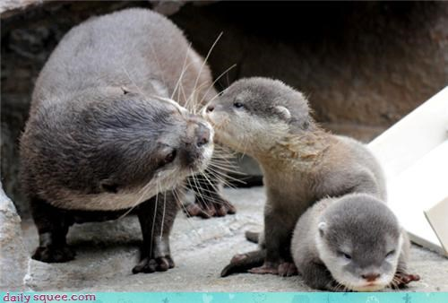 baby,KISS,otter