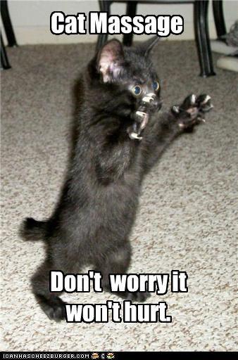 claws kitten massage - 3538147072