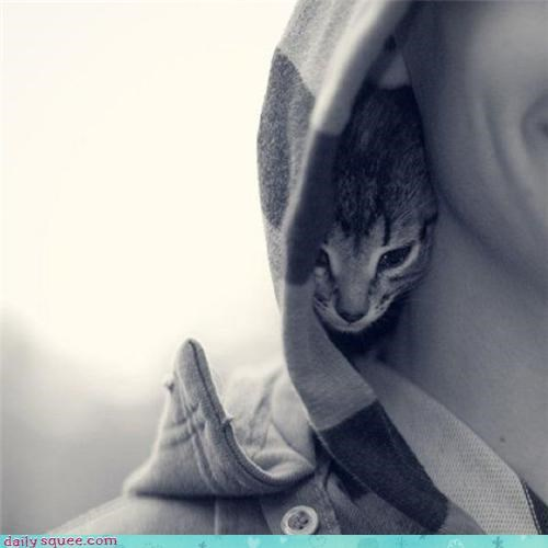 hoodie,kitten,sneaky