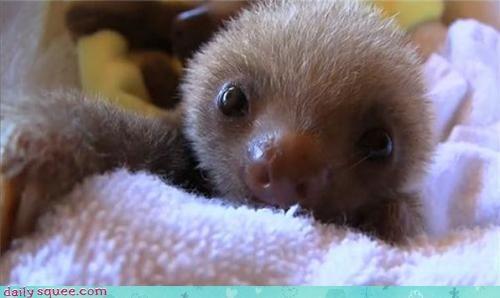 boop,nose,sloth
