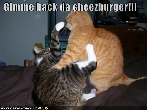 Cheezburger Image 3538501376