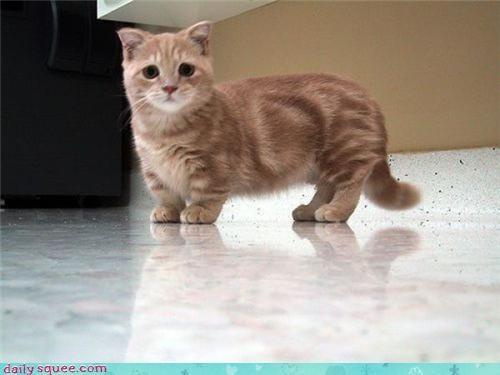cat face kitten