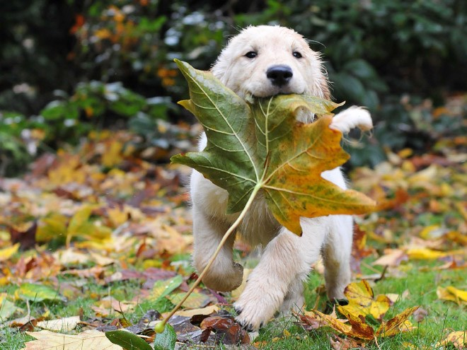 a funny dog list loving fall