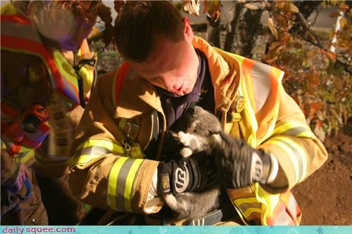 humans-on-my-daily-squee kitten savior - 3539939584