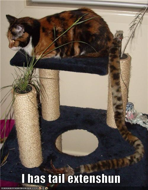 scratching posts tail - 3540719104