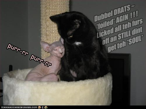 Dubbel DRATS ~ *foiled* AGIN ! ! ! Licked all teh furs off an STILL dint get teh *SOUL* purr-rr purr-rr