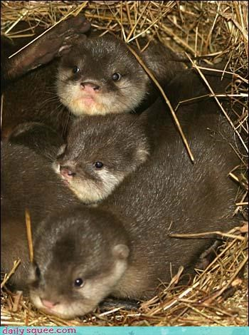 cute otter squee spree - 3542715904