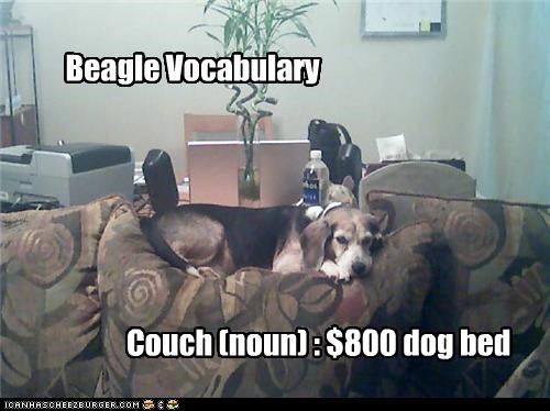 beagle couch definition Hall of Fame noun Pillow sleep vocabulary - 3544004096