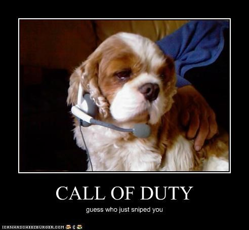 call of duty,cavalier king charles spaniel,microphone,sniped,video games