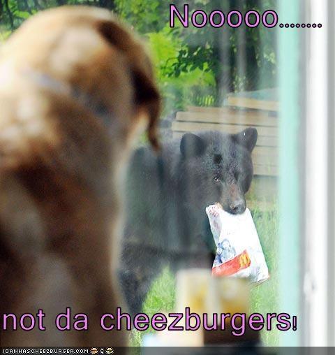 Cheezburger Image 3544084736