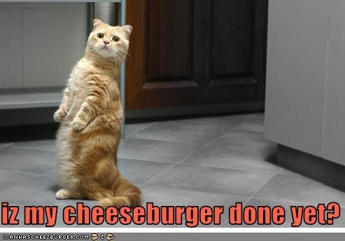 Cheezburger Image 3545114368