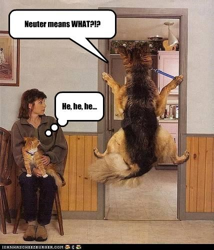 Neuter means WHAT?!? He, he, he...