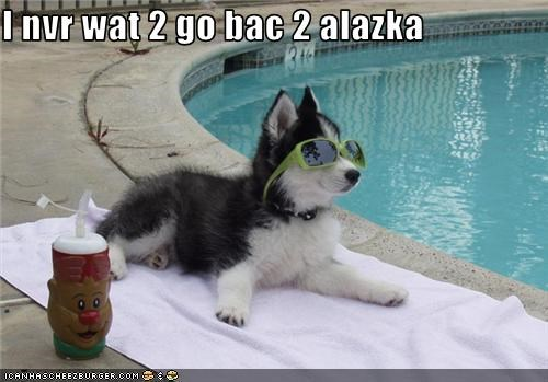 husky pool puppy sunglasses - 3545756416