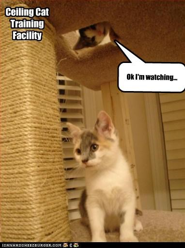 Ceiling Cat Training Facility Ok I'm watching...