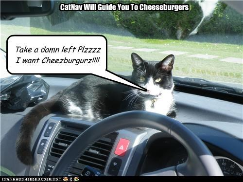 Cheezburger Image 3546656256