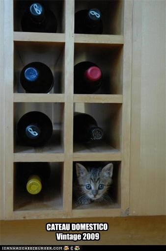 cute kitten look a like wine - 3547405568