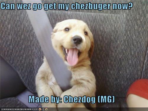 Cheezburger Image 3547961856
