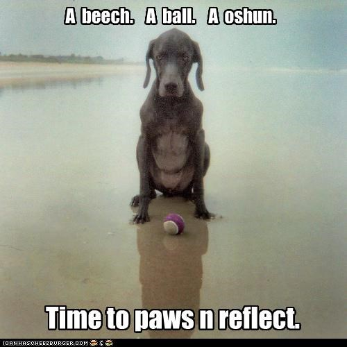 ball beach ocean reflection whatbreed - 3548557568