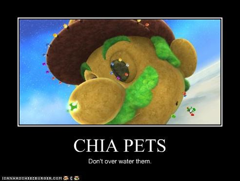CHIA PETS Don't over water them.
