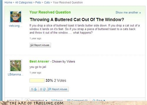 butter,cat