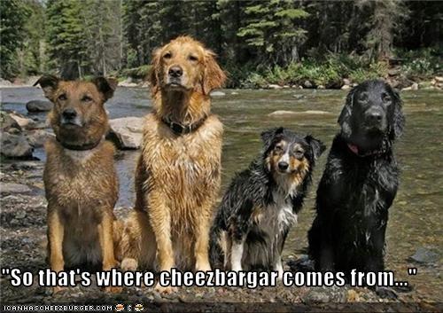 Cheezburger Image 3549719808
