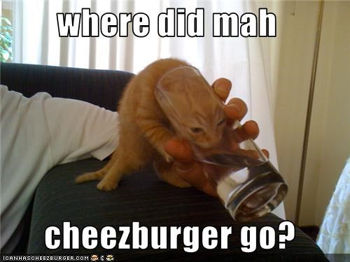 Cheezburger Image 3550057728
