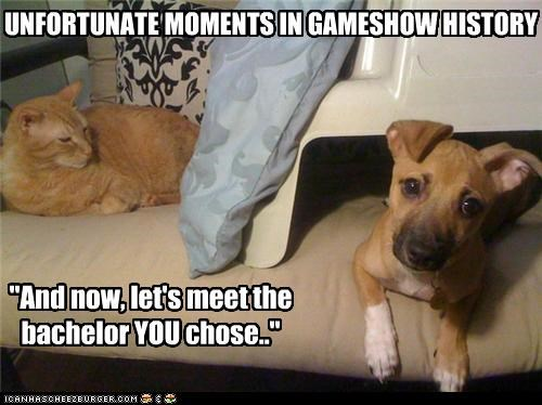 bachelor cat dating disappointment game show mistake pit bull puppy unfortunate - 3550276096