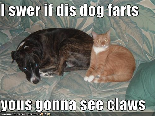 cat couch dogs fart what breed - 3550762496