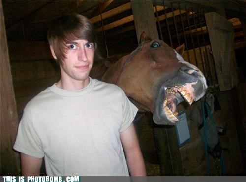 animals,horse,killer,photobomb