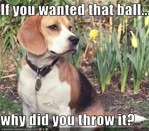 beagle fetch Hall of Fame puppy question - 3551752192