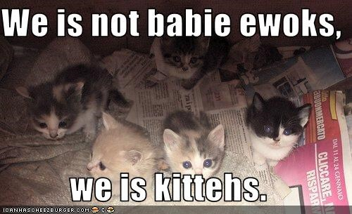 We is not babie ewoks,  we is kittehs.