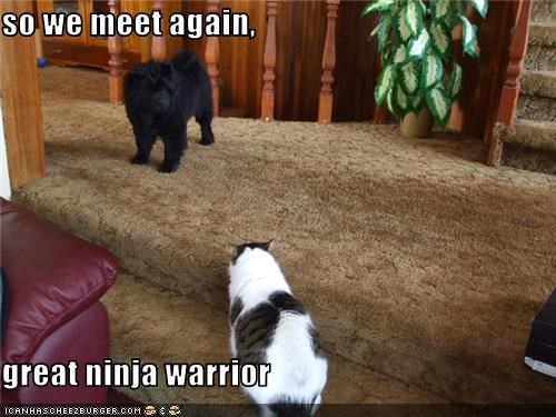 cat,chow chow,fight,ninja