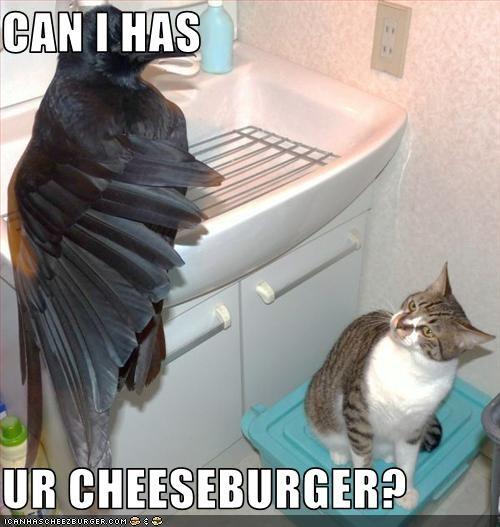 Cheezburger Image 3554615808