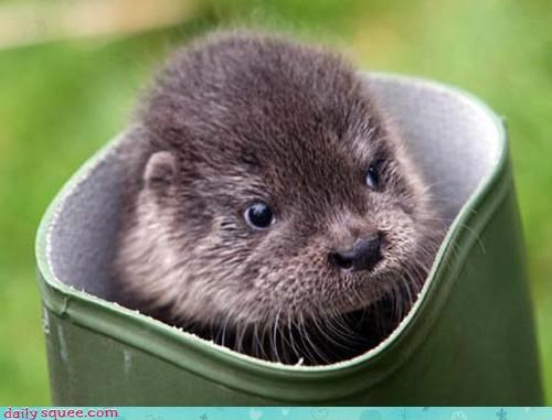 face nerd jokes otter