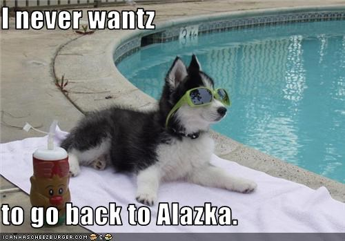 alaska best of the week Hall of Fame huskie pool puppy - 3557410048