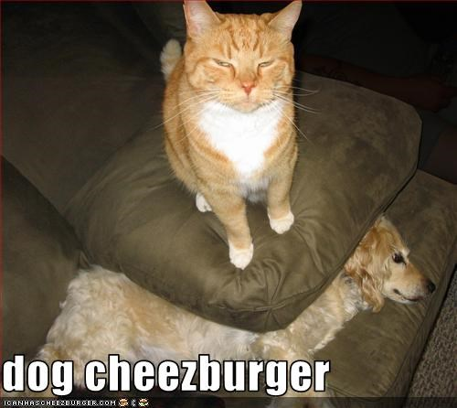 Cheezburger Image 3557891584