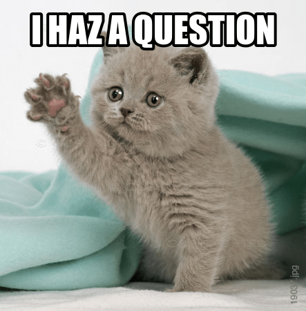 questions your cat is wondering about