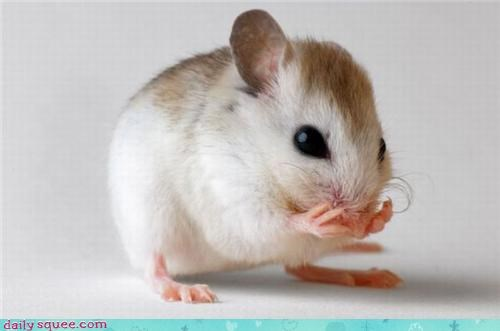 face hamster whiskers - 3558919936